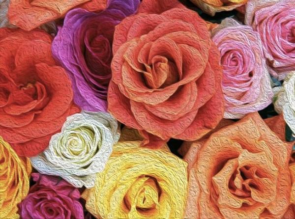 roses oil