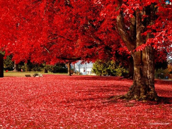 autumn-6a