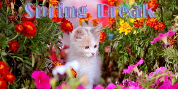 2-Friday Spring Break