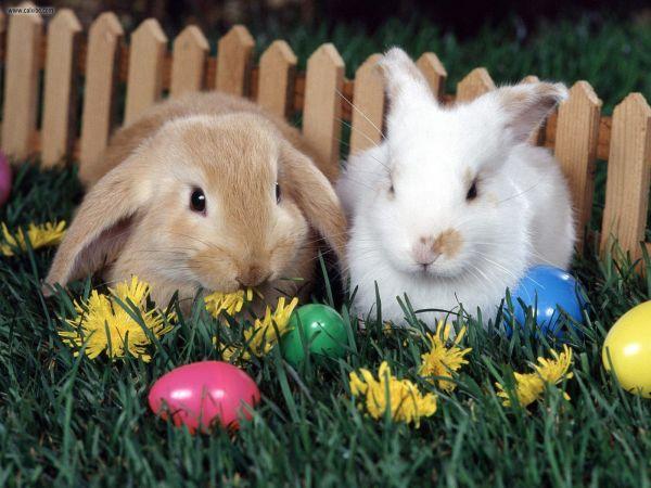 bunniesneggs