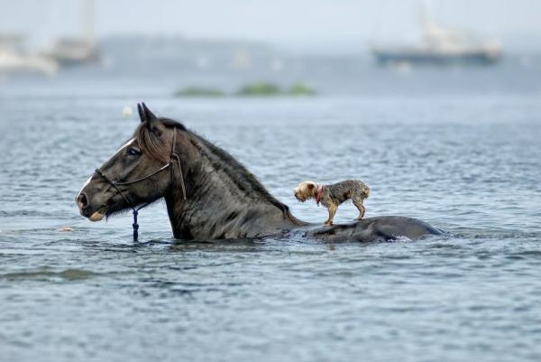 Helping-a-friend